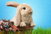 Conejo bebé en pasto — Foto de Stock