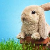 Bebek tavşan çim — Stok fotoğraf