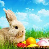 Piccolo coniglietto di pasqua e uova di pasqua sull'erba verde — Foto Stock