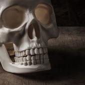 Skull on wood — Stock Photo
