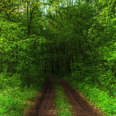 Dark forest and a road — Stockfoto