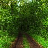Donker bos en een weg — Stockfoto