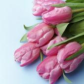 As tulipas cor de rosa — Foto Stock
