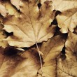 Autumn maple leaf on leaves background — Stock Photo