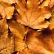 Autumn maple leaf on leaves background — Stock Photo #35469905