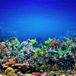 Coral Reef — Stock Photo #35469977