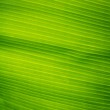 Banana leaves — Stock Photo #35470397