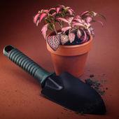 дом цветок в горшке — Стоковое фото
