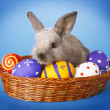 Easter basket with decorated eggs and the Easter bunn — Stock Photo