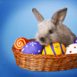 Easter basket with decorated eggs and the Easter bunn — Stock Photo #42935743