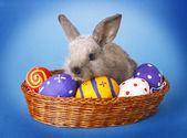 Easter basket with decorated eggs and the Easter bunn — Foto Stock