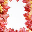 Frame made of autumn leaves isolated on white — Stock Photo