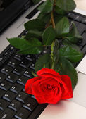 A red rose on a computer keyboard — Stock Photo