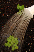 Close-up of watering can sprinkling water in the garden — Stock Photo