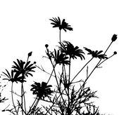 Daisies silhouettes against white background — Stock Photo