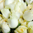 Close up of a bouquet of white roses — Stock Photo