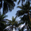 Upward view of palm trees against blue sky — Stockfoto