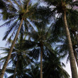 Upward view of palm trees — Stock Photo