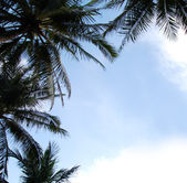 Upward view of Coconut (palm) Trees against a blue sky background forming a border — Stock Photo