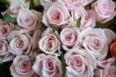 Close up of a bouquet of pink roses — Stock Photo