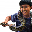 Stock Photo: Pet snake