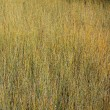 A texture of tall grass in a field — Stock Photo