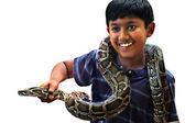 Pet snake — Stock Photo