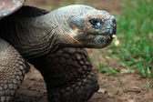 Close up of a tortoise — Stock Photo
