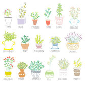 Herbs and spices set in pots with flowers — Stock Vector