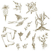 Garden herbs sketch with birds, plants, gumboots — Stockvektor