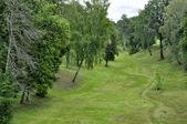 Floresta e paisagem ravina — Foto Stock