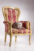 Cat On Armchair — Stock Photo