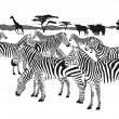 Stock Vector: Herd of zebras