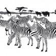 Herd of zebras — Stock Vector