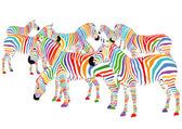 Färgglada zebror — Stockvektor