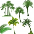 Stock Vector: Set of palm tree