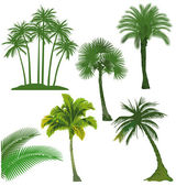 Set of palm tree — Stock Vector