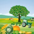 Agriculture and harvest, thanksgiving - Stock Vector