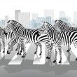 Zebras on pedestrian crossing — Stock Vector
