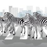 Zebras on pedestrian crossing — Stock Vector #34559359