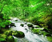 Nice mountain stream with green stones — Stock Photo