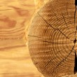 Close-up wooden cut — Stock Photo