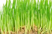 緑の草の示す根 — ストック写真