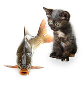 Home cat and a carp fish isolated — Stock Photo