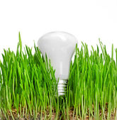 Light bulb on grass symbolizing green energy — Stock Photo