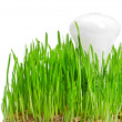 Light bulb on grass symbolizing green energy — Stock Photo #14384147