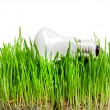 Light bulb on grass symbolizing green energy — Stock Photo #14849221
