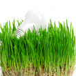 Light bulb on grass symbolizing green energy — Stock Photo #16964977