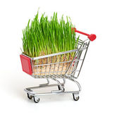 Green grass in shopping cart isolated on white background — Stock Photo