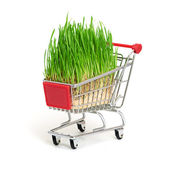 Green grass in shopping cart isolated on white background — Стоковое фото